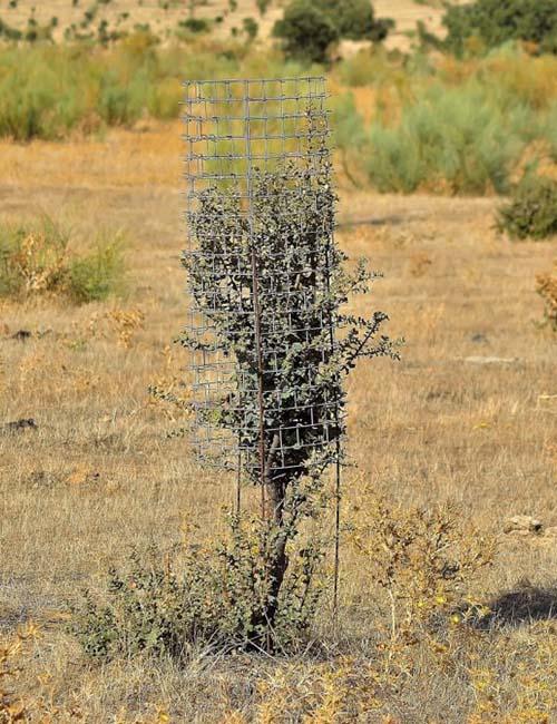 protector arboles cactus