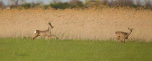 protección de cultivos en cotos de caza